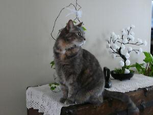 Gentille chatte adulte opérée et calme