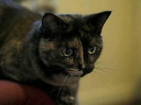 Female cat