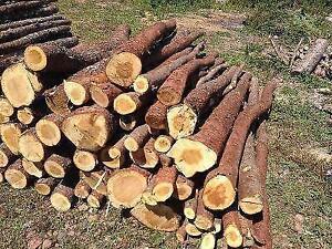 Cords of spruce or juniper St. John's Newfoundland image 2