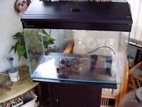 Clear seal fish tank with accessories and hood