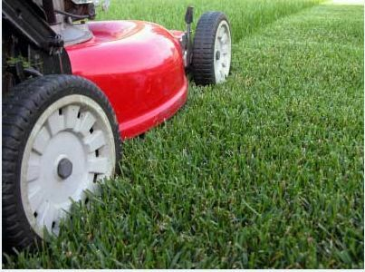 Adrian The Mower Man Rosebery Palmerston Area Preview