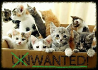 May 2015 Unwanted Pregnant or Nursing Mom and Kittens Surrenders