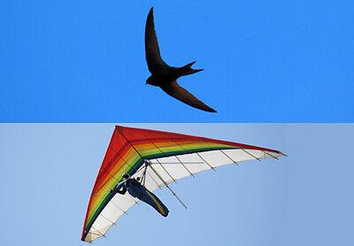 Fly like a Bird!