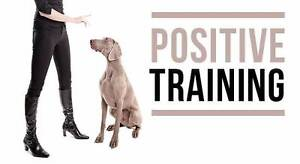 Responsive Dog Training Perth Perth City Area Preview