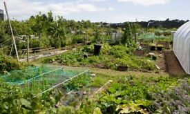 Allotment wanted