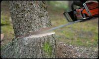 Tree Cutting/Trimming
