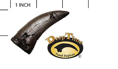 Daspletosaurus Tooth - Cast Replica, Dinosaur Tooth (SN12)