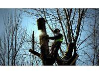 Experienced Tree Surgeons/Climbing Arborists