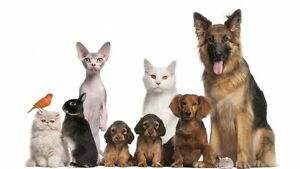LC's Pet sitting and Dog walking services