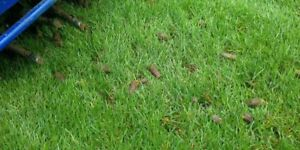 Lawn Care Aeration Dethatching Services Available