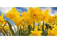 Coton Spring Fayre