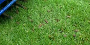 Aeration Dethatching Services Available Today Lawn Care