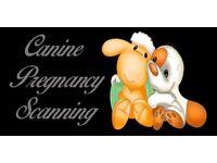 Mobile Ultrasound - Dog and Cat Pregnancy Scanning - West Midlands area