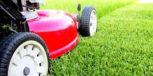 LAWN CARE IN NORTH YORK