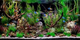 Wanted fish tank aquarium