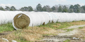 4x4 Silage Bales for sale Prince George British Columbia image 1