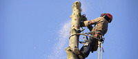 Tree Removing+ Pruning and Landscaping Services