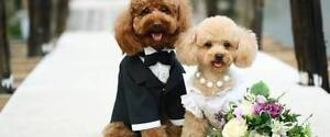 Pet Weddings Perth Perth Perth City Area Preview