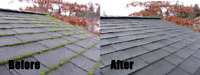 Gutter Cleaning, Moss Removal, Windows and More 2507131859
