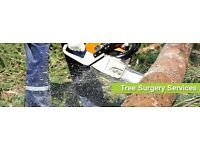 Reading based Professional Tree Surgery Services