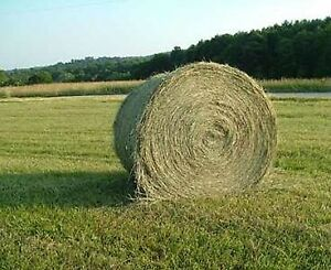 Hay - Round and Square Bales For Sale