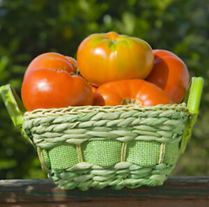 Heirloom Tomato Seeds - Canada - FREE SHIPPING over $50