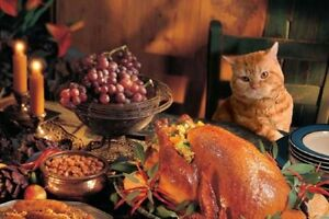 Cat Action Team Thanksgiving Hamper O'Plenty