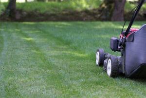 www.kingpelouse.com Tonte de pelouse et plus 438 763-0040