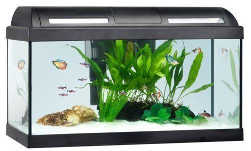Marine aquarium fish tank ebay - Table basse aquarium prix ...
