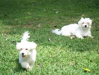 Pet Sitting for Dogs in Caring and Loving Private Home