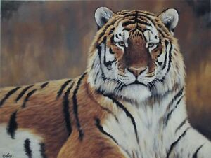 "Limited Edition print - Cyril Cox - ""Eyes of the Wild"""