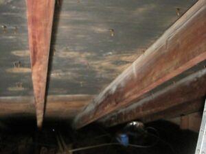 Mold Test or inspection or Radon test