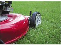 Gardener - Garden maintenance - Crouch End and surrounding area