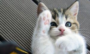 Gardienne pour chat à mon domicile - 15 $ par jour