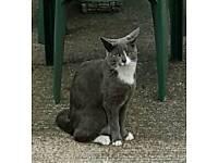 ***Missing cat ***