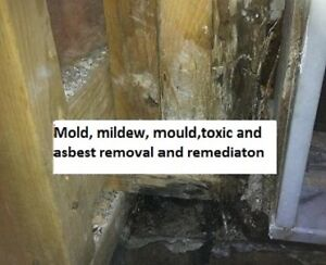 Get rid of mold and mildew forever now with affordable price