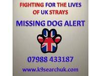 lost found dogs west midland