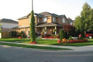 Detached home rent at Brampton Bovaird and McLaughlin for Nov 1