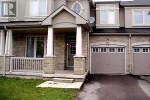 A House For Rent  in Richmond Hill ( Yonge and Stouffville)