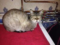 Cats Protection Shop Macduff