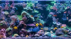 Thunder Bay Reef Keepers on face book saltwater fish corals