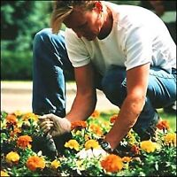 Need a gardener? Looking for lawn care gardening landscaping?
