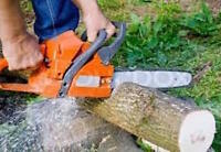 TREE REMOVAL - 25% off until July 25