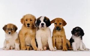 Looking for a puppy! Brookfield Melton Area Preview
