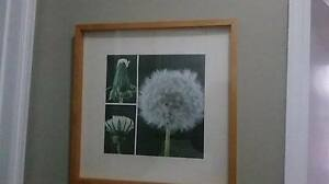 Various prints and frames