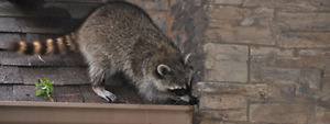 ANIMAL REMOVAL AND PEST CONTROL