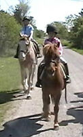 Summer camp councellor /working student positions on horse farm