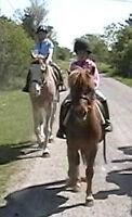 Summer kids horse camp