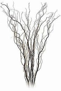 Spiral Willow Branches For Sale