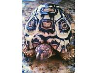 leopard tortoise *can deliver*